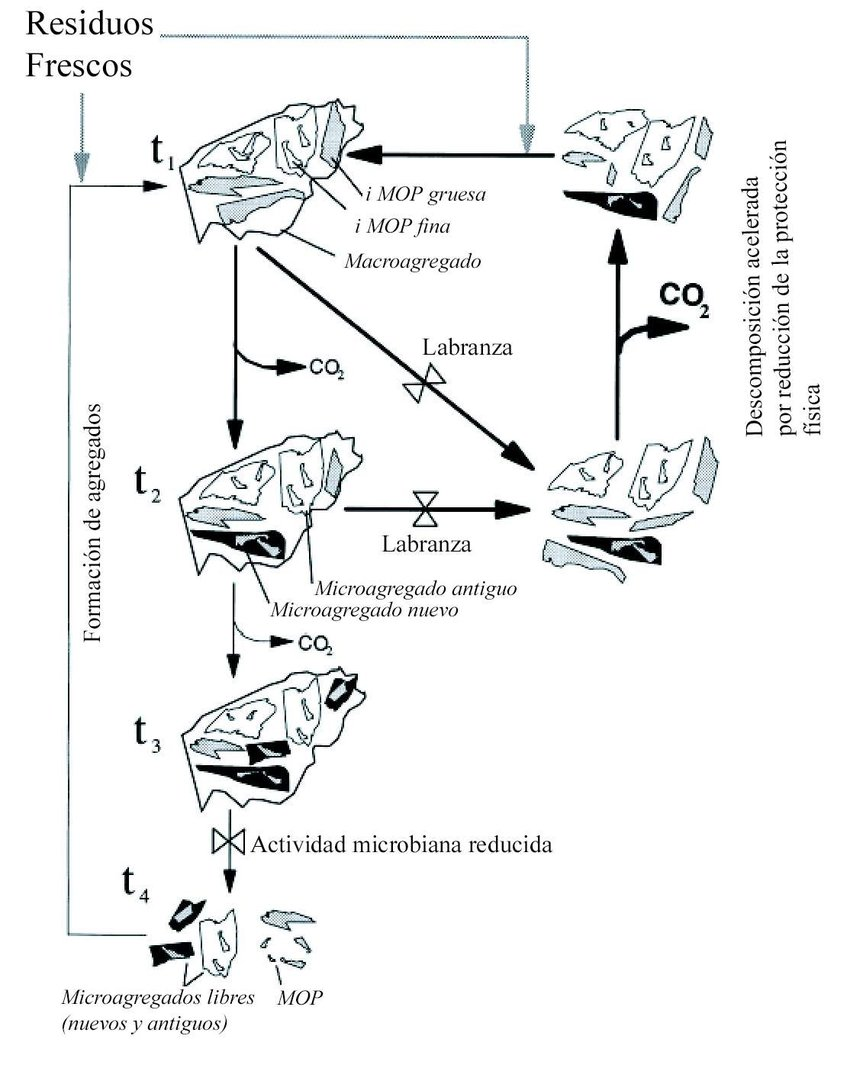 Cycle of formation and destruction of soil aggregates