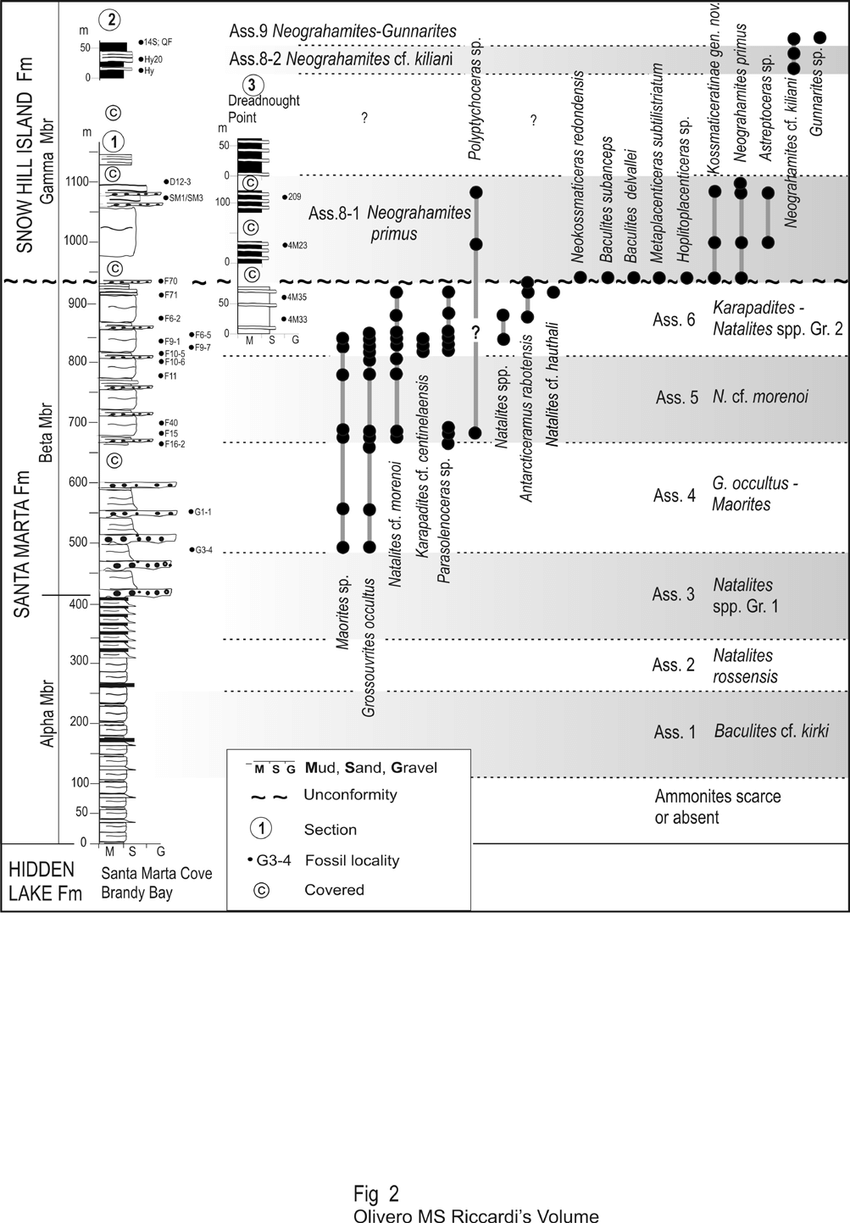 hight resolution of biostratigraphic range of selected ammonites for the beta member of the santa marta formation and the gamma member of the snow hill island formation in the