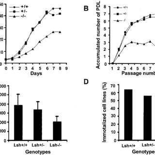 (PDF) Lsh-deficient murine embryonal fibroblasts show