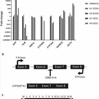 (PDF) Pharmacogenetic profiling and metabolic activity of
