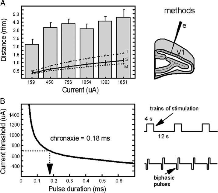 Using functional magnetic resonance imaging (fMRI) of V1