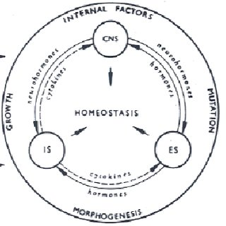 Diagram of an insect granular cell emphasizing its