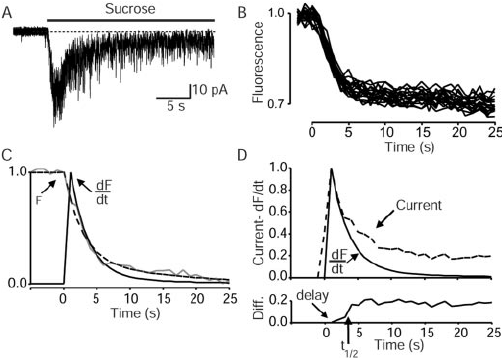 Evaluation of sucrose-induced release by simultaneous