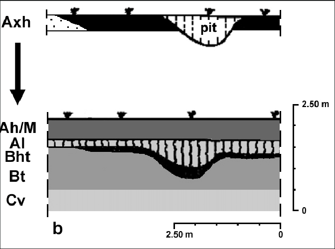horizon diagram soil formation rv battery as it might have occurred in the lower rhine basin schematic processes typically transport clay and humus from topsoil