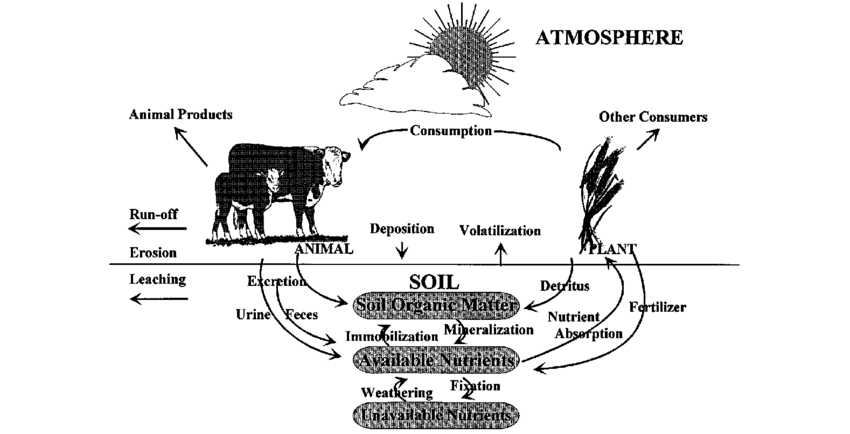 Simplified illustration of ecosystem level nutrient cycle