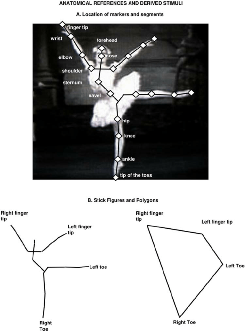medium resolution of anatomical references for angle analysis and stimuli for the aesthetic preference experiment a body