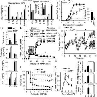 Multiple sclerosis immunopathogenesis and therapeutic