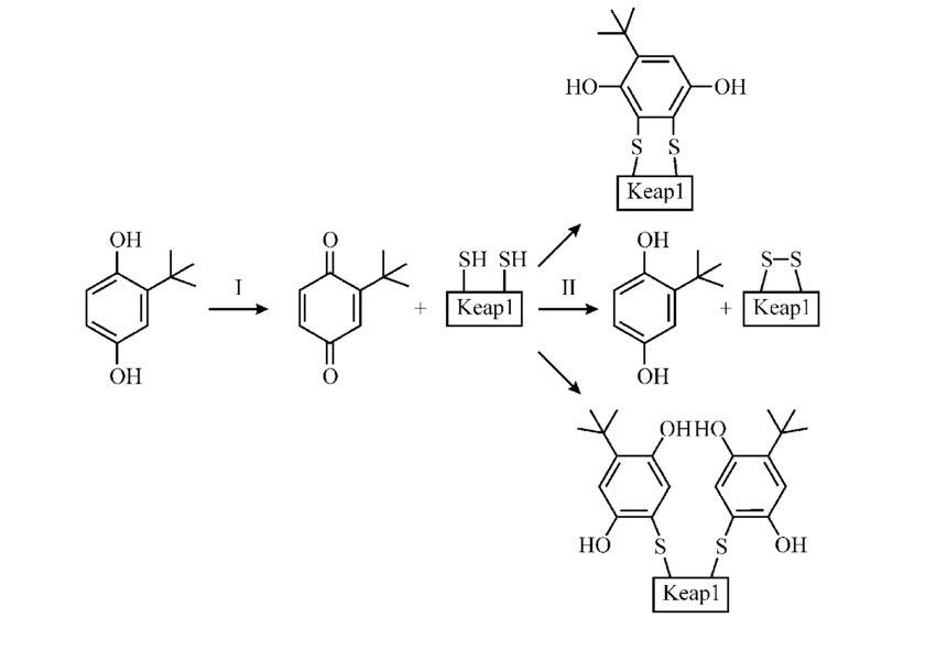 Twoostage model of activation of the Keap1/Nrf2/ARE system