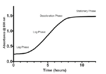 Typical yeast growth curve. Saccharomyces cerevisiae grown
