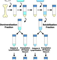 flow chart depicting a generalized extraction method chicken boneflow chart depicting a generalized extraction method chicken [ 850 x 1444 Pixel ]