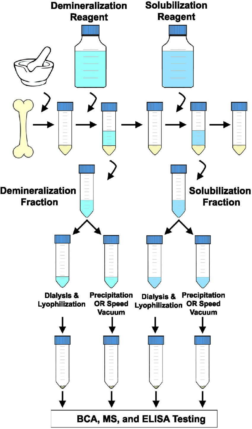 hight resolution of flow chart depicting a generalized extraction method chicken boneflow chart depicting a generalized extraction method chicken
