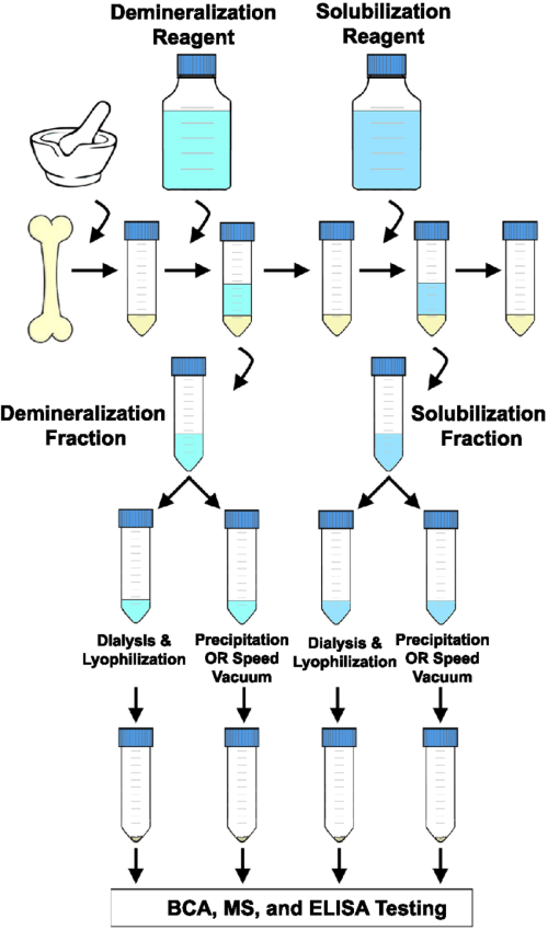 small resolution of flow chart depicting a generalized extraction method chicken boneflow chart depicting a generalized extraction method chicken