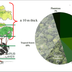 Diagram Of A Tropical Forest Gfci Split Receptacle Wiring Rainforest Proportion And Its Canopy Structure Layers Visualisation Figure 1a Shows Five Strata Height Or