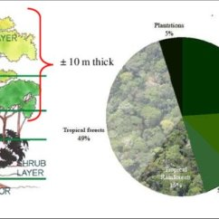 Diagram Of A Tropical Forest Electrical Wiring Explained Rainforest Proportion And Its Canopy Structure Layers Visualisation Figure 1a Shows Five