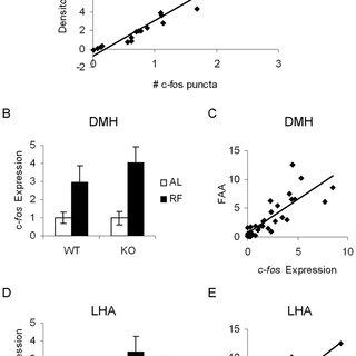 A. Daily food intake of WT (squares) or KO (circles) mice