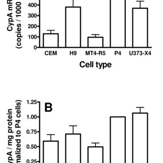 Effect of cyclosporine A on the infectivity of recombinant