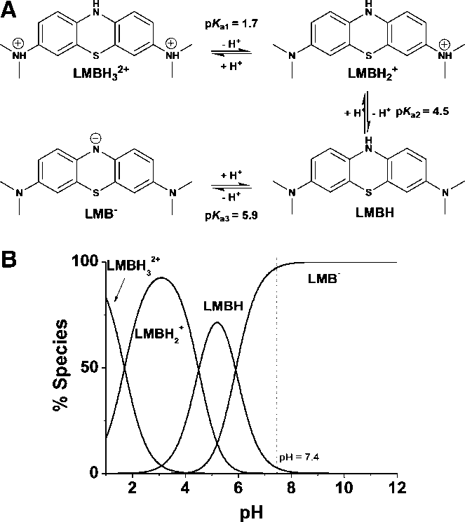 Protolytic properties of leucomethylene blue (LMB) in