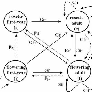 (PDF) Effects of density and fire on the vital rates and