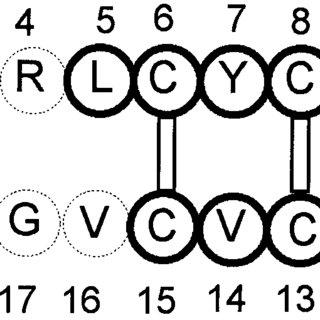 Primary structure of protegrin PG-1. Residues 5 to 15