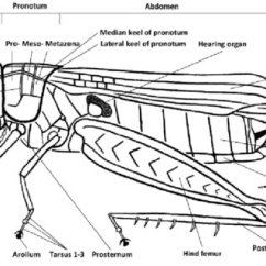External Grasshopper Diagram Minn Kota Wiring 12 Volt Anatomy Of A Josef Tumbrinck Download
