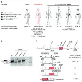 (PDF) New lessons from an old gene: complex splicing and a