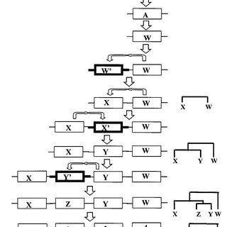 Schematic representation of the molecular structure of