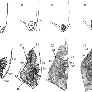 (PDF) Overview of seed development, anatomy and morphology