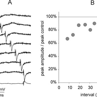(PDF) Does trans-spinal and local DC polarization affect