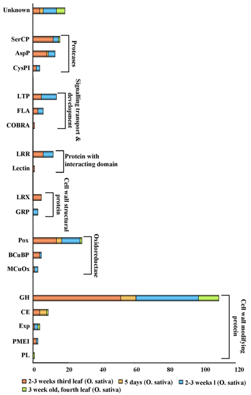 small resolution of the developmental stage specific comparative ecm proteome in rice ecm diagram biology
