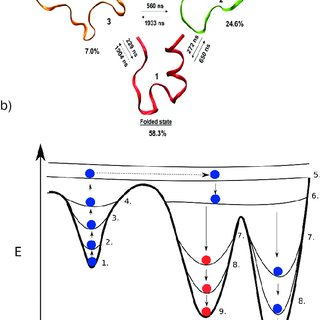Schematic pictures of free-energy pro fi les in protein