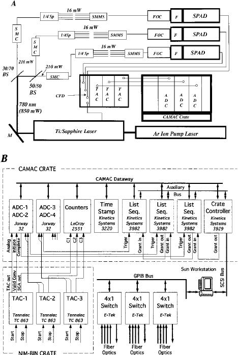 Block diagram of multichannel, fiber-optic-based TCSPC