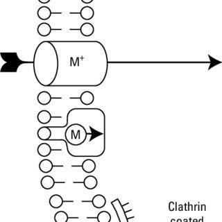 34. β-oxidation of aliphatic hydrocarbons by bacteria. (H