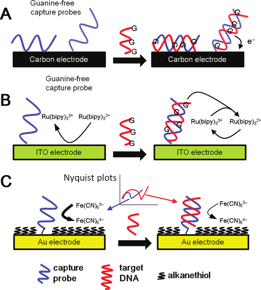 medium resolution of overview of label free hybridization schemes commonly used in ec dna download scientific diagram