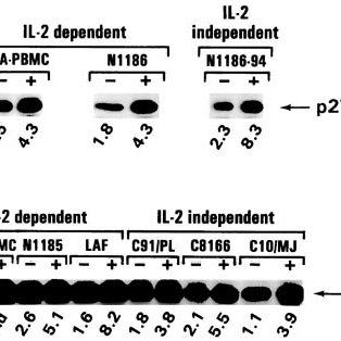 The effect of pRb2/p130 induction on E2F-binding capacity