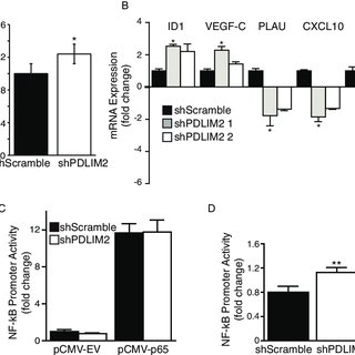 (PDF) PDLIM2 regulates transcription factor activity in