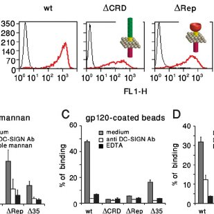 (PDF) The Neck Region of the C-type Lectin DC-SIGN