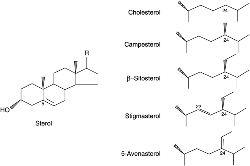 Chemical structure of sterols, showing the side-chain (R