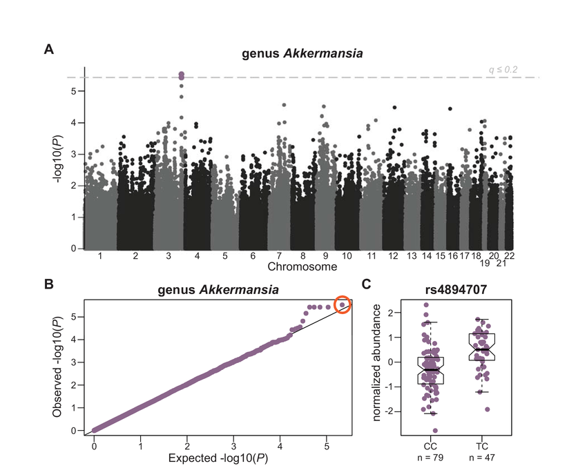 GWAS of genus Akkermansia relative abundance. A) Manhattan