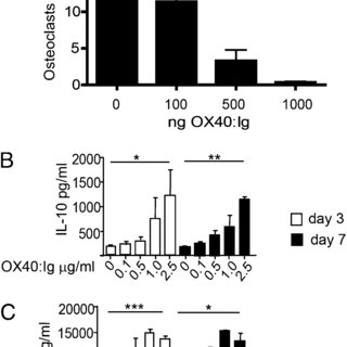 OX40L is critical for bone homeostasis in vivo. (A