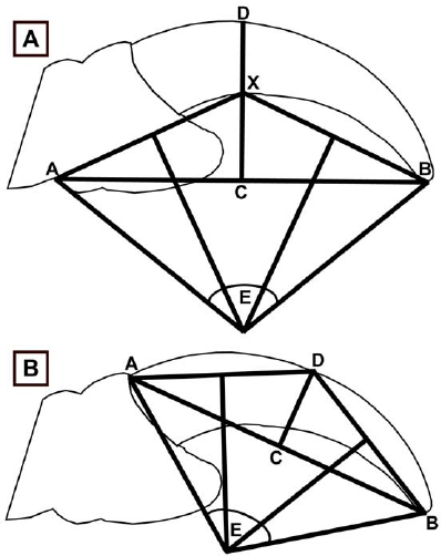 Representation of curvature measurements. (A) Inner claw