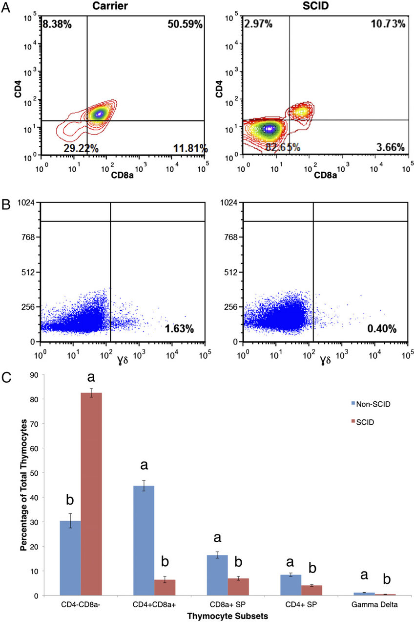 hight resolution of flow cytometry shows very few cd4 cd8 and gd cells in scid pig