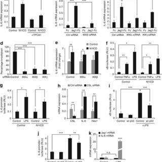 Notch regulates distinct gene sets in MDA-MB-231 and MCF7