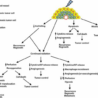 Simplified model of the effects of radiation on tumor