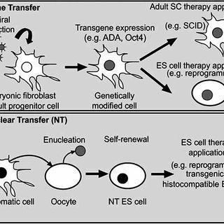(PDF) Patenting Human Genes and Stem Cells