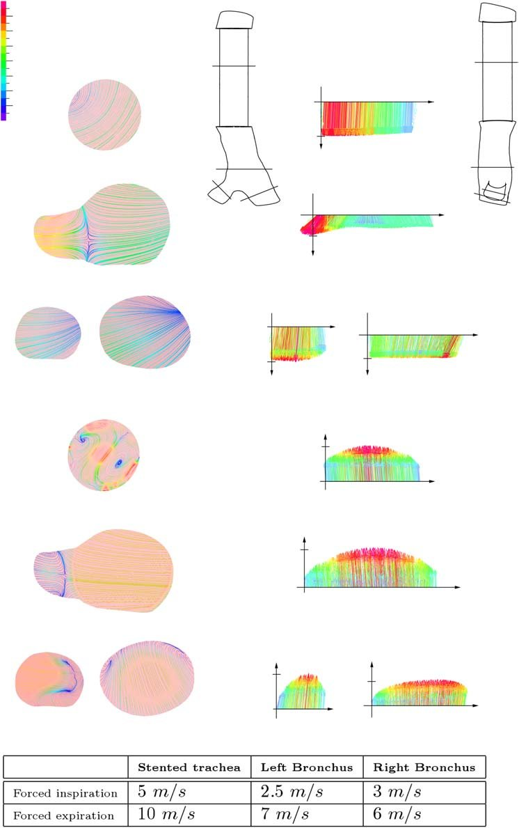 medium resolution of projected 2d streamlines in m s on longitudinal sections of the download scientific diagram