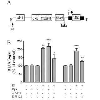 Effect of AP-1 and NF- B mutants on IL-6 promoter