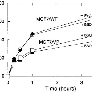 Northern and Western blot analyses of MRP5 expression in