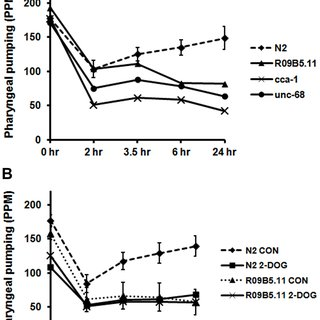 Severity of daf-2 allele affects recovery of pharyngeal