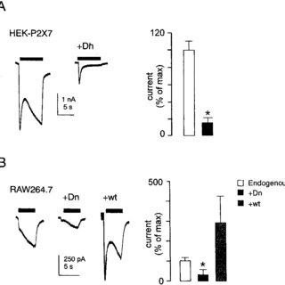 Suppression of YO-PRO-1 uptake by dominant-negative