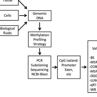 (PDF) Aberrant DNA Methylation and Prostate Cancer